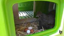 un nid séparé pouvant etre fermé par une porte coulissante