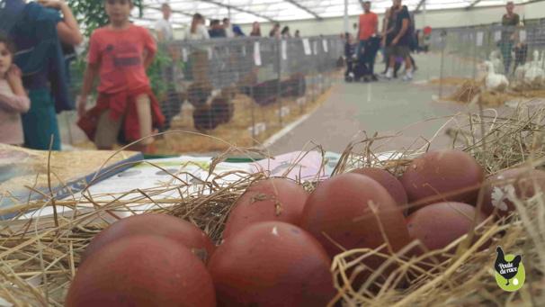 Exposition avicole en Avignon