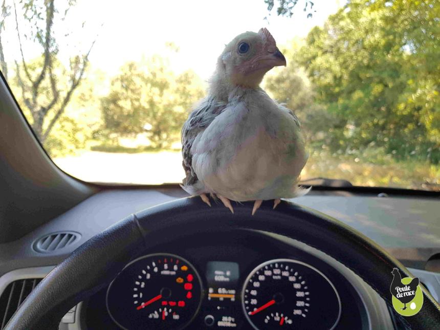 nouvelle réglementation du transport des animaux vivants