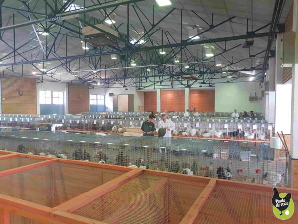 évaluation des sujets par les juges avicoles