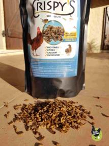 Des insectes pour nos poules