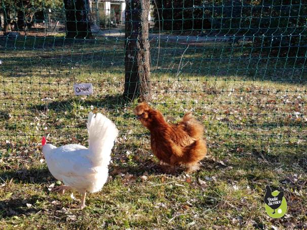 filet pour poules nouvelle génération