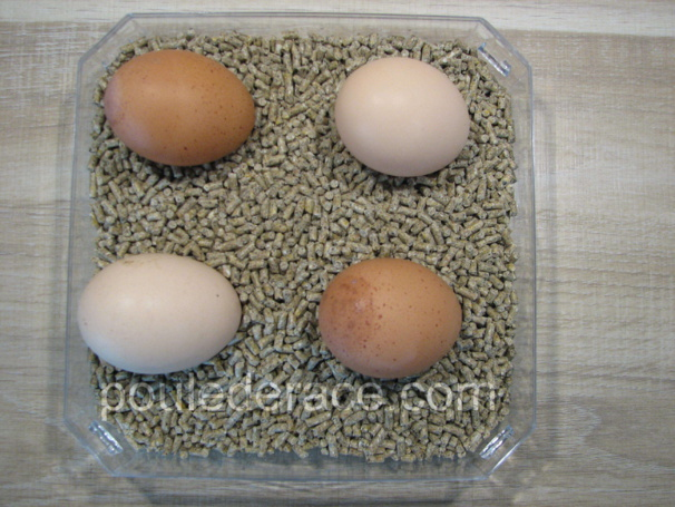 Conserver des oeufs f cond s - Conservation des oeufs de poule ...