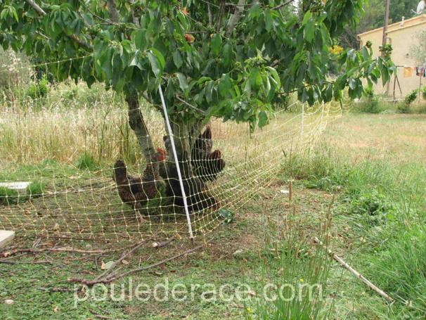 prévoyez d'inclure des arbres et arbustes dans votre parcours, ils seront utiles pour l'ombre et serviront de protection contre les rapaces