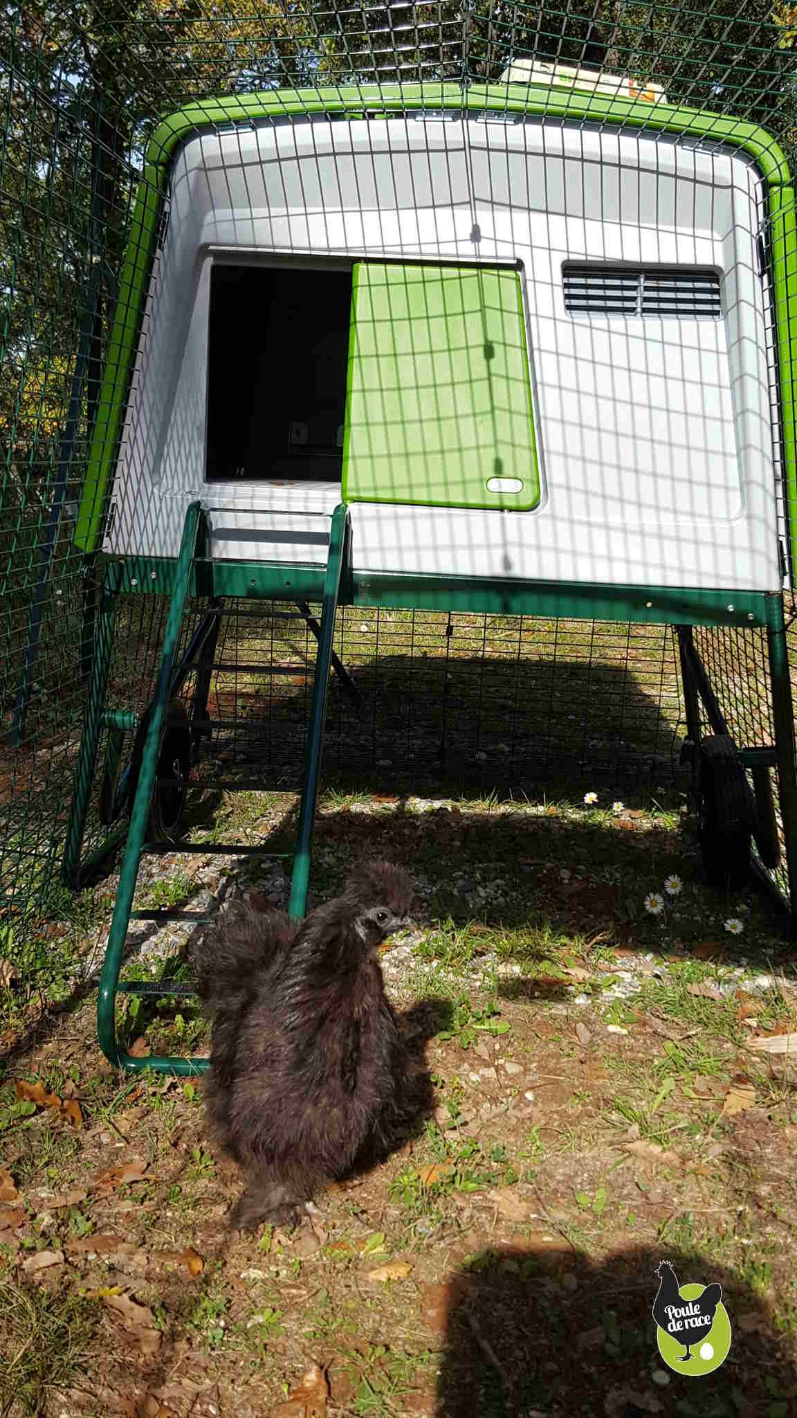 sous le poulailler un abris pour se proteger du soleil ou de la pluie