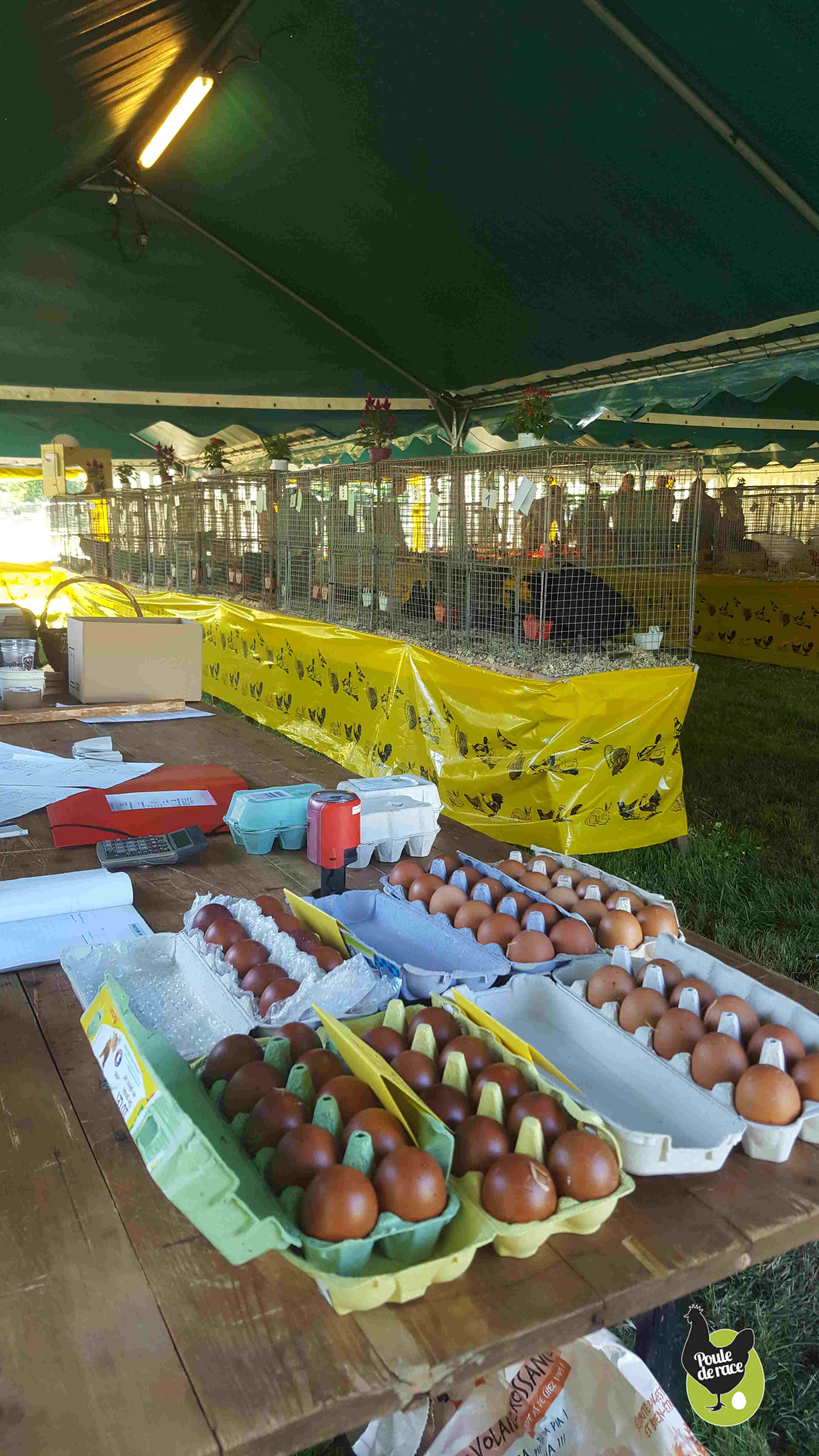 il y avait aussi des oeufs fécondés à vendre