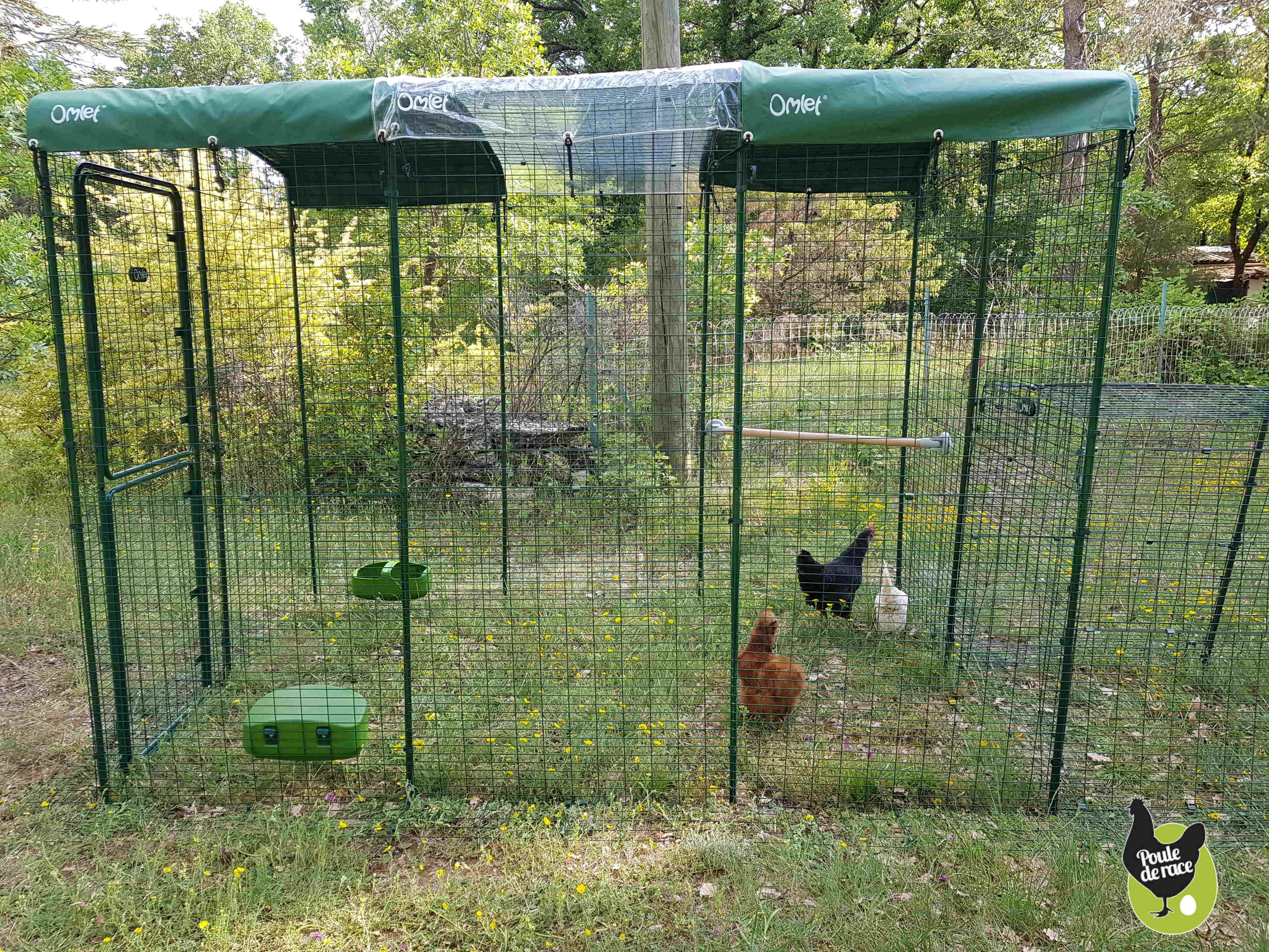 Mettre Des Poules Dans Son Jardin grand enclos sécurisé