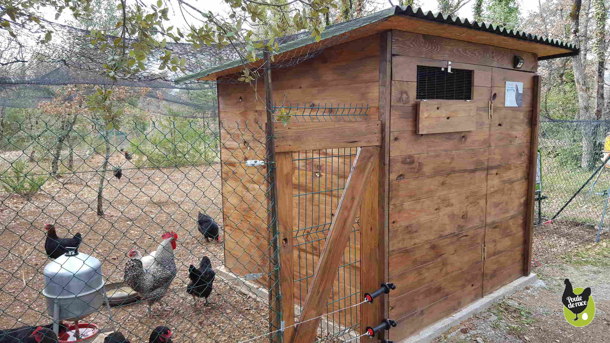 Adopter des poules