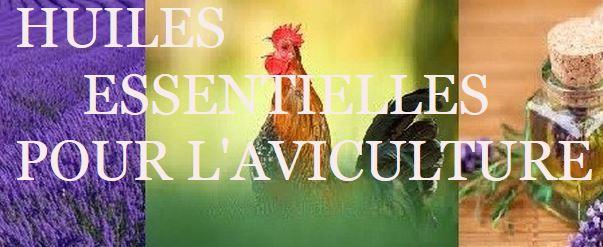 Des huiles essentielles pour nos poules