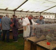Journée de la poule de Marans en Belgique
