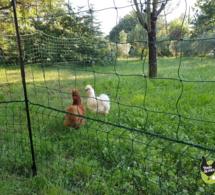 Filet à poules