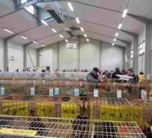 Exposition avicole de Haute Savoie