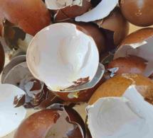 que faire avec les coquilles d'œufs