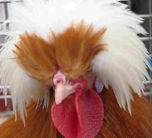 28 eme exposition Européenne d'aviculture (suite et fin)